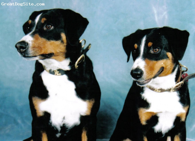 Black and tan dog breeds