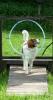 Kooikerhondje