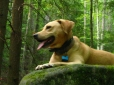 Mountain View Cur