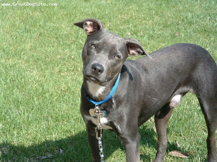 Blue Lacy, Picture Of Array : Rothermel Blog  Blue Lacy: Rothermel blog  blue lacy