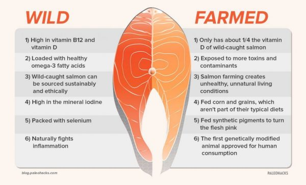 Farmed vs. Wild Salmon oil
