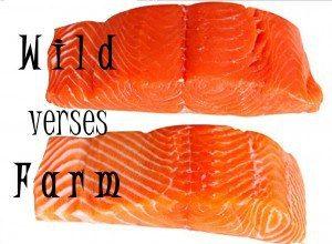Wild Vs. Farmed Salmon oil for pets