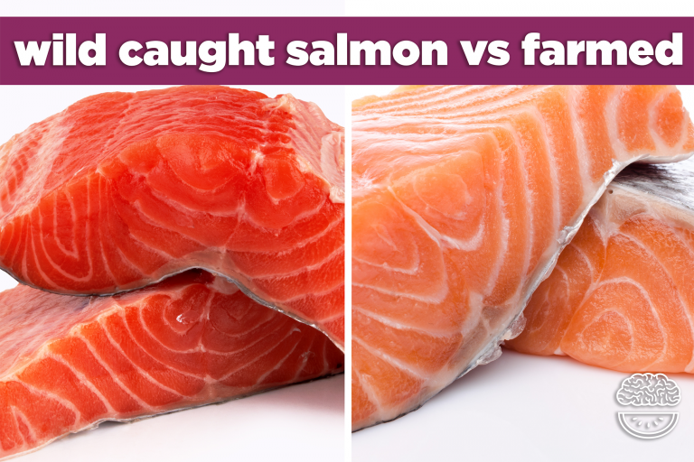 Difference between Farmed and Wild Salmon oil